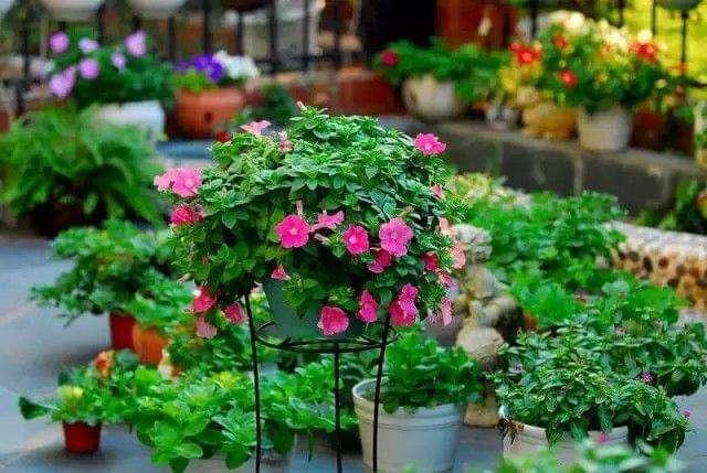 六大不适合室内养殖的花卉植物