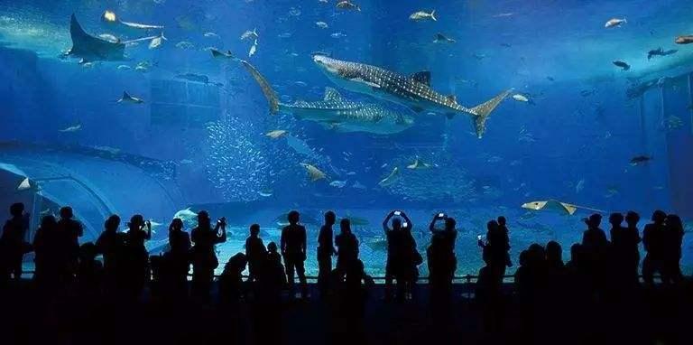 全球最著名的二十大海洋馆(水族馆)