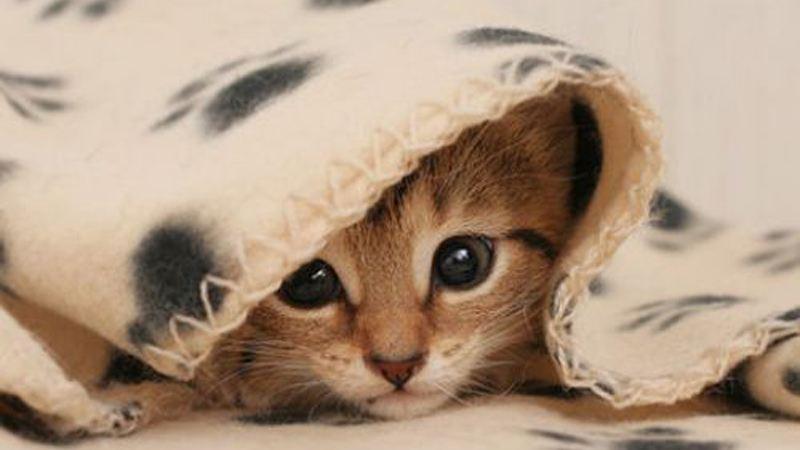 爱原来是一床温暖的被子